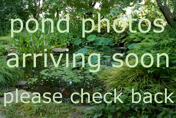 more beautiful pond photos coming soon please check back