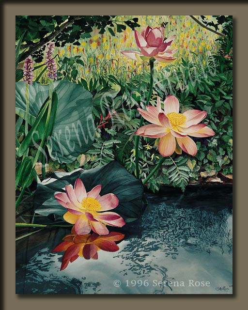 Giclee prints by Serena Rose, Among the Lotus Blossoms is a painting of beautiful lotus blossoms from the artist's own watergarden.