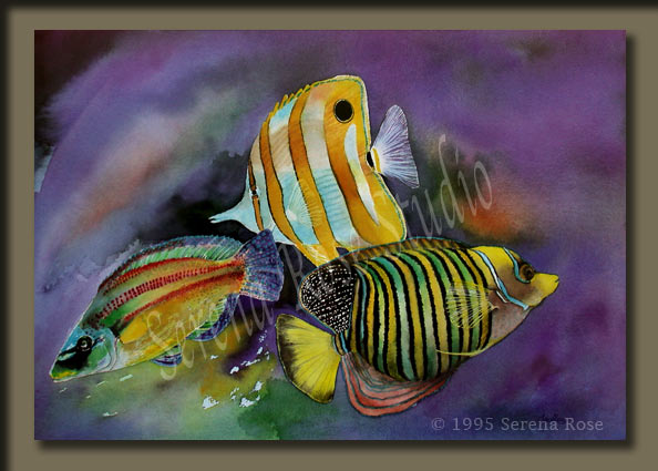 Beautiful signed prints of very colorful tropical fish